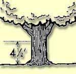 Tree Circumference